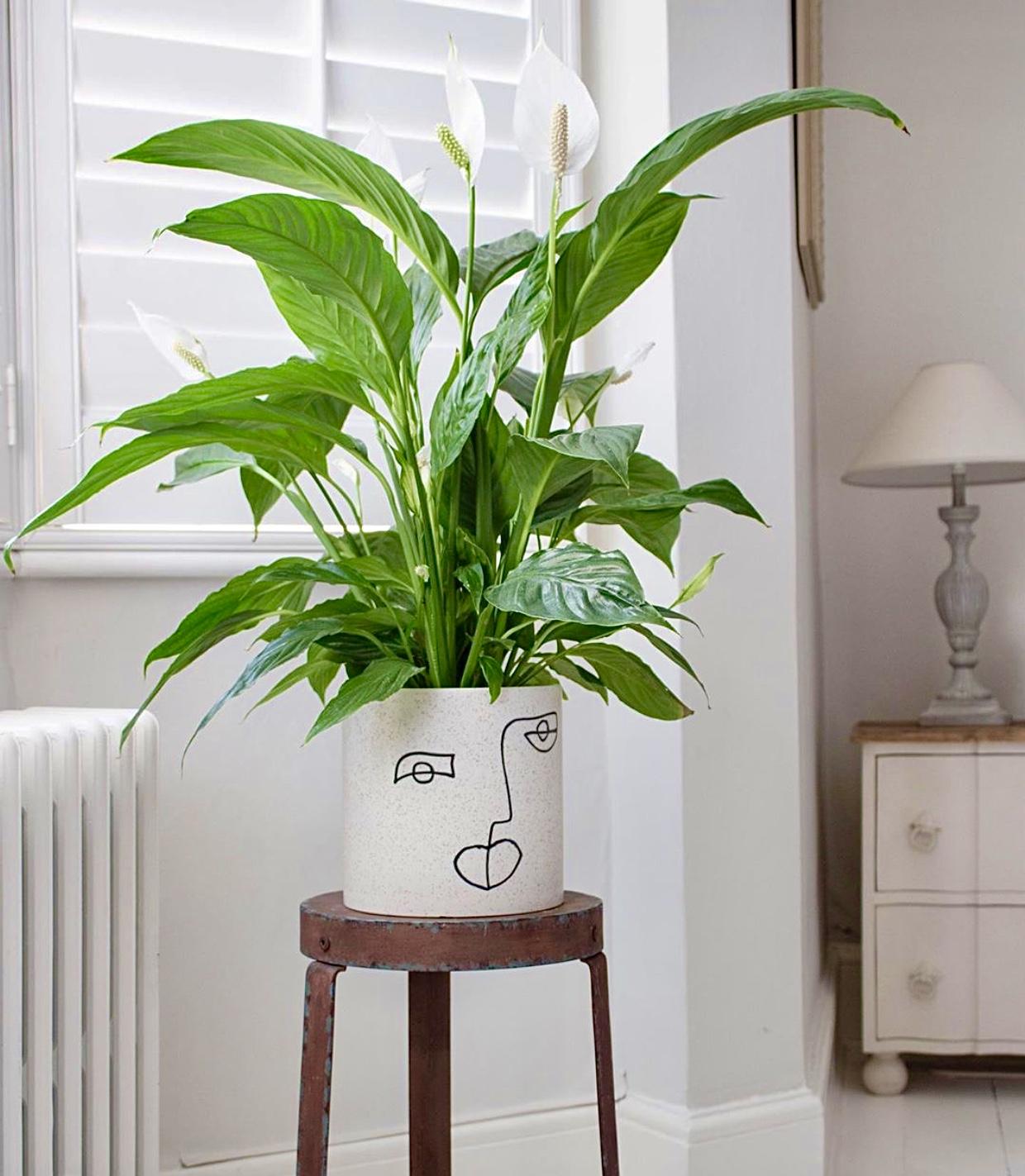 Houseplants-6